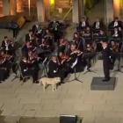 Бездомно куче меломан е новата звезда в You Tube /видео/